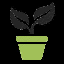 گیاهان اپارتمانی