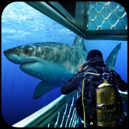 Deep Blue Sea Shooting