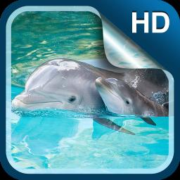 Dolphin Live Wallpaper HD