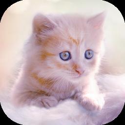 Cute Kitten Live Wallpapers