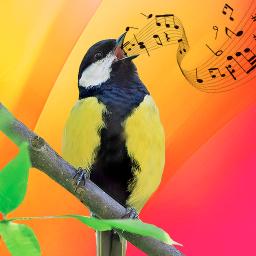 Best Bird Sounds, Calls & Ringtones