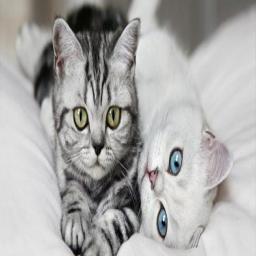 نگهداری گربه های خانگی