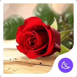 Red rose love - APUS Launcher theme