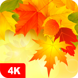 Autumn Wallpapers 4K