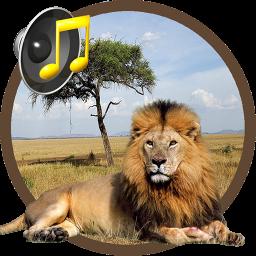صدای حیوانات و زیستگاه های آن ها