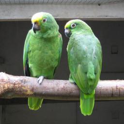 آموزش تربیت پرنده سخنگو