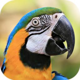 آموزش سخنگو کردن پرنده و قناری