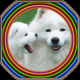 آموزش پرورش ونگهداری سگ خانگی