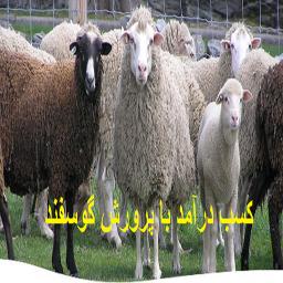 کسب درآمد با پرورش گوسفند
