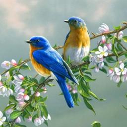 70 Bird Sounds and Ringtones