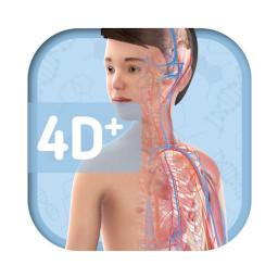 Humanoid 4D+