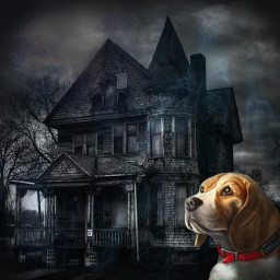 Lost dog: Scary house of horror and fear.