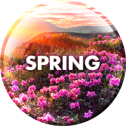 Wallpapers in the spring
