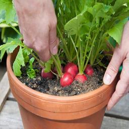 آموزش کاشت سبزیجات