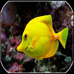 ماهی های زینتی