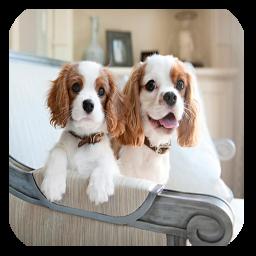شناخت و تربیت سگ های خانگی