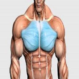 آموزش حرکات بدنسازی سینه