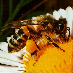 آموزش کامل پرورش زنبور عسل