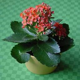 آموزش ساخت گلهای ڪاغذی