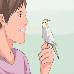 آموزش سخنگو کردن پرنده