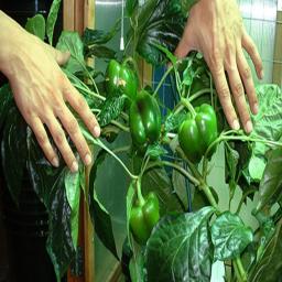آموزش کشاورزی سبزیجات