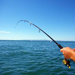 ماهیگیری حرفه ای