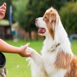 آموزش به حیوانات خانگی