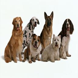 اطلاعات سگ ها