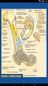 اسکرین شات برنامه آناتومی جامع بدن انسان 5