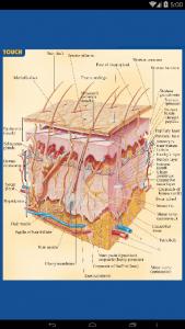 اسکرین شات برنامه آناتومی جامع بدن انسان 11