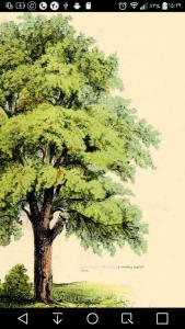 اسکرین شات برنامه پیوند درختان 1