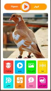 اسکرین شات بازی آقای قوقولی | صدای حیوانات 3