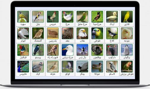 اسکرین شات برنامه صدای پرندگان، حیوانات و حشرات 2