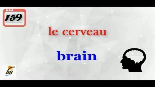 اسکرین شات برنامه آموزش 500 لغت رایج در زبان فرانسوی 4